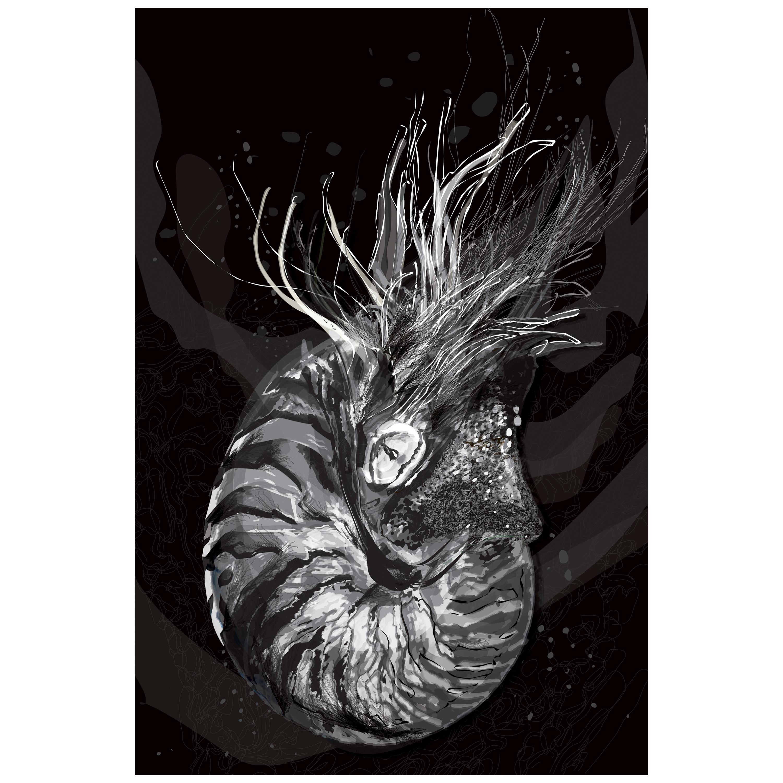 Nautilus 1 / Nueva Zoología / Selene Lazcarro