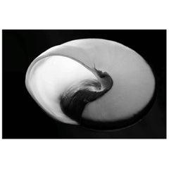 Nautilus, Seashell