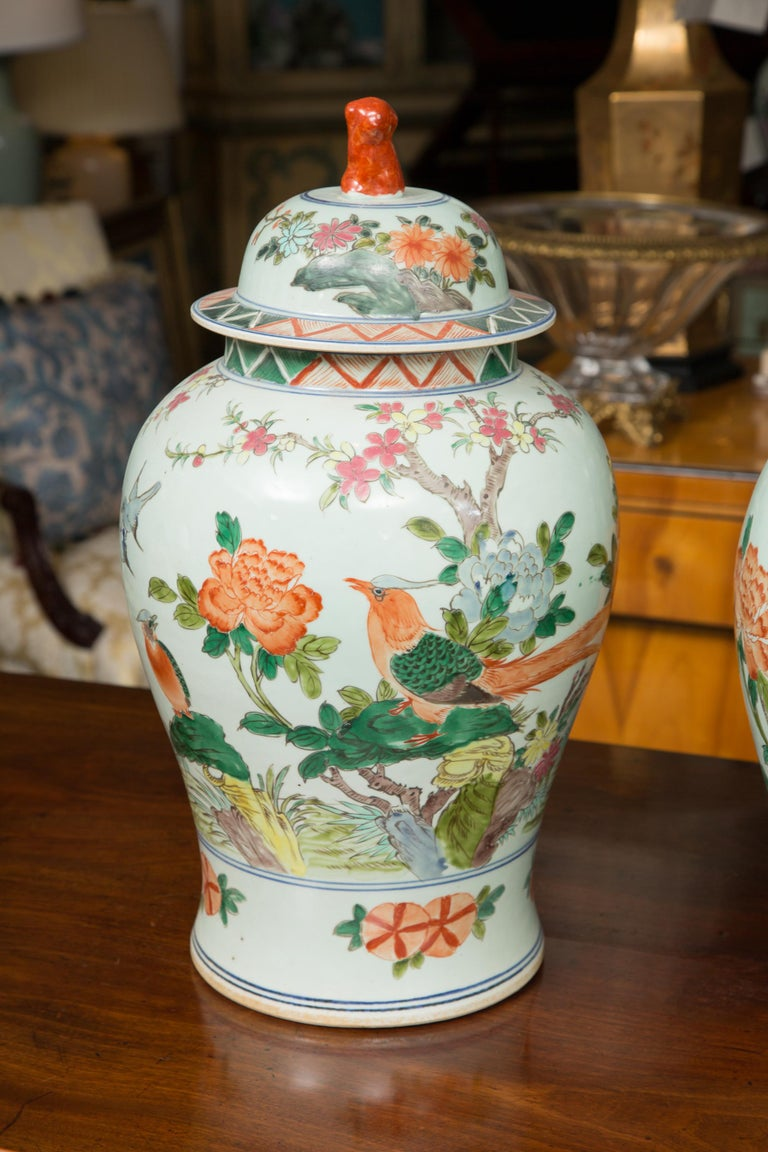 These are a pleasant near pair of celadon lidded urns with a Classic scene of birds and flowers. The deep green, yellow and tangerine colors all blend for a sophisticated home accent, 20th century.