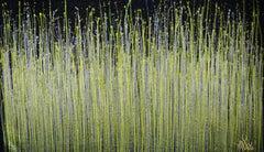 A closer look (Luminance garden) 3, Painting, Acrylic on Canvas