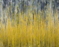Garden in motion 4 (Autumn), Painting, Acrylic on Canvas