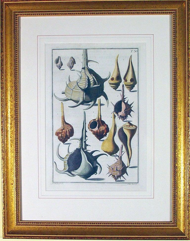 Georgian Niccolò Gualtieri Pair of Framed Copperplate Engravings of Sea Shells For Sale