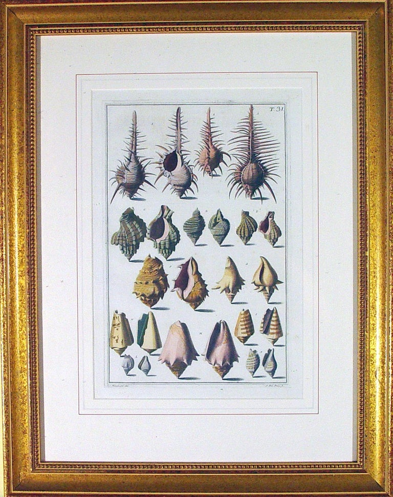 Italian Niccolò Gualtieri Pair of Framed Copperplate Engravings of Sea Shells For Sale