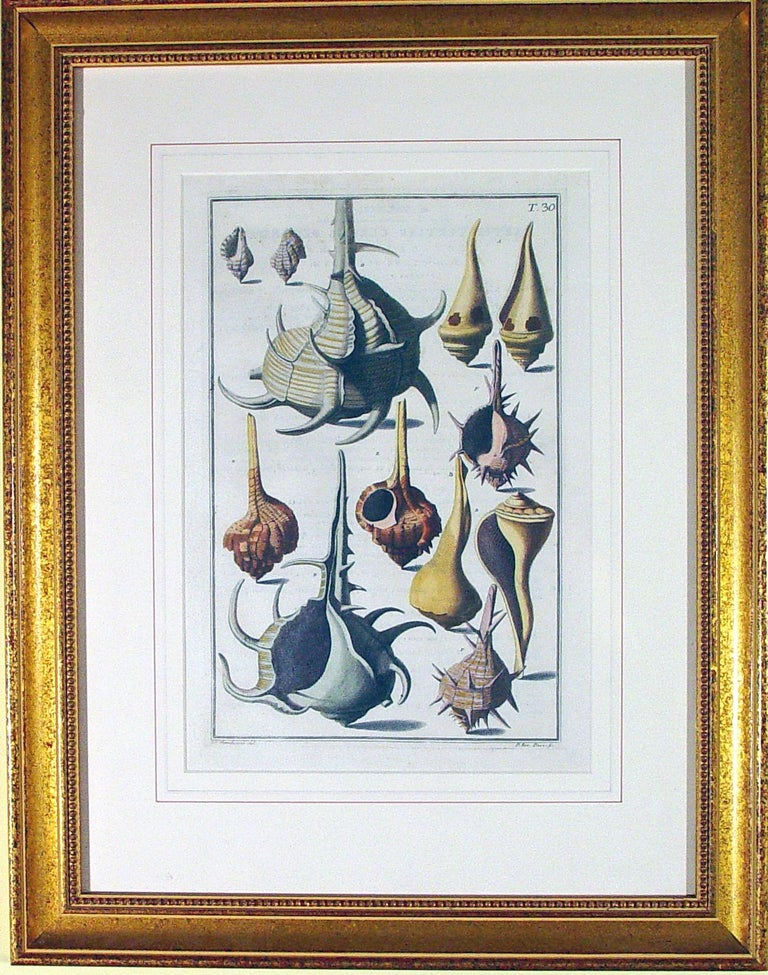 Niccolò Gualtieri Pair of Framed Copperplate Engravings of Sea Shells In Good Condition For Sale In Downingtown, PA