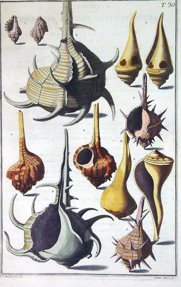 18th Century Niccolò Gualtieri Pair of Framed Copperplate Engravings of Sea Shells For Sale