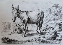 Donkey, Sheep, and Goats