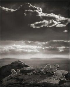 Cheetah & Cubs Lying on Rock, Serengeti – Nick Brandt, Africa, Rock, Sky