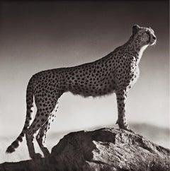 Cheetah Standing on Rock, Serengeti