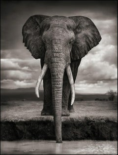 Elephant Drinking, Amboseli – Nick Brandt, Africa, Animal, Elephant