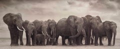 Elephant Group on Bare Earth, Amboseli– Nick Brandt, Africa, Animal, Elephant