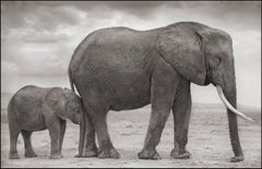 Elephant Mother and Baby at Leg, Amboseli – Nick Brandt, Africa, Elephant, Art