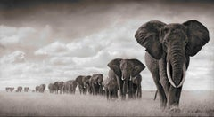 Elephants Walking Through Grass, Amboseli – Nick Brandt, Elephants, Photography