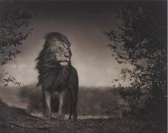 Lion Before Storm I, Masai Mara – Nick Brandt, Africa, Lion, Storm, Nature, Art
