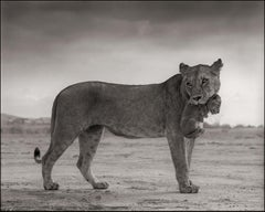 Lioness Holding Cub in Mouth, Maasai Mara – Nick Brandt, Lion, Africa, Animals