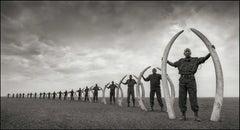 Rangers (Line Of) With Tusks Of Killed Elephants, Amboseli – Nick Brandt, Africa