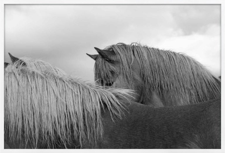 Nick Turner, Untitled (Horse Eye), Iceland - Photography