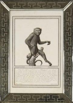 Nicolas Jacob: Stipple Engravings of Monkeys, C1810, Set of 12