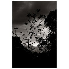 """Nightfall"" Black & White Photography Gelatin Silver Print by Ana Maria Cortesão"