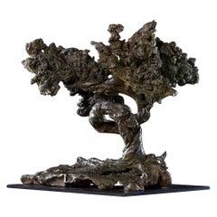 Niki Stylianou Bonzai Sculpture in Bronze