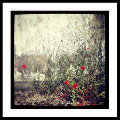 Poppies II Photography