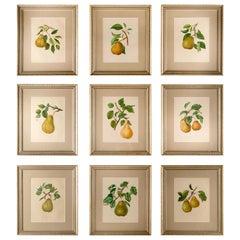 Nine 19th Century Pears