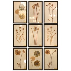 Nine Finely Framed Dried Flowers Each Under Glass Framed