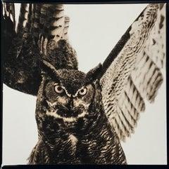 Owl VI, Great Horned, ed. 2/50