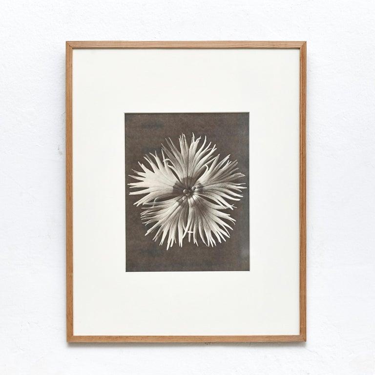 Nine Karl Blossfeldt Black White Flower Photogravure Botanic Photography, 1942 For Sale 3