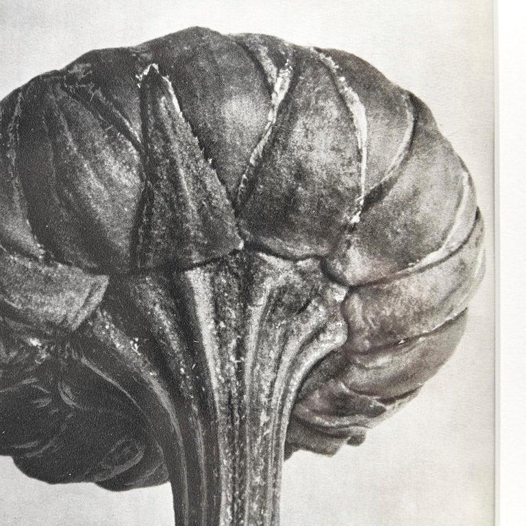 Nine Karl Blossfeldt Black White Flower Photogravure Botanic Photography, 1942 For Sale 6