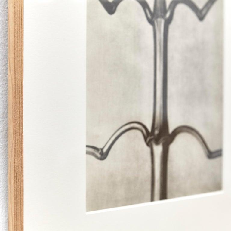 Nine Karl Blossfeldt Black White Flower Photogravure Botanic Photography, 1942 For Sale 7
