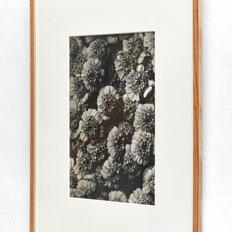 Nine Karl Blossfeldt Black White Flower Photogravure Botanic Photography, 1942 For Sale 8