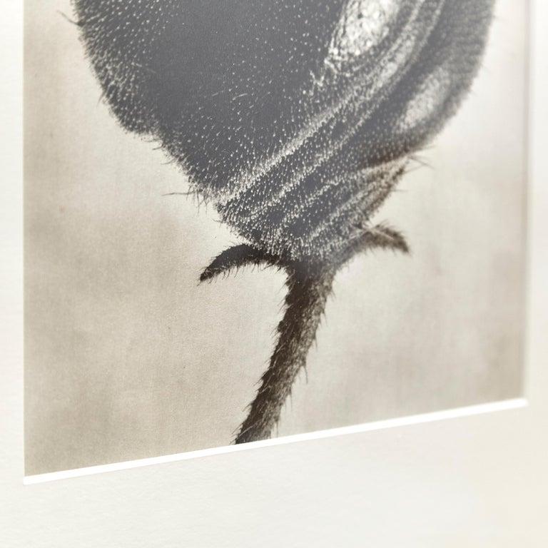 Nine Karl Blossfeldt Black White Flower Photogravure Botanic Photography, 1942 For Sale 10