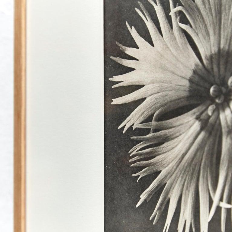 Nine Karl Blossfeldt Black White Flower Photogravure Botanic Photography, 1942 For Sale 11