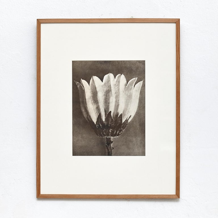 Nine Karl Blossfeldt Black White Flower Photogravure Botanic Photography, 1942 In Good Condition For Sale In Barcelona, Barcelona