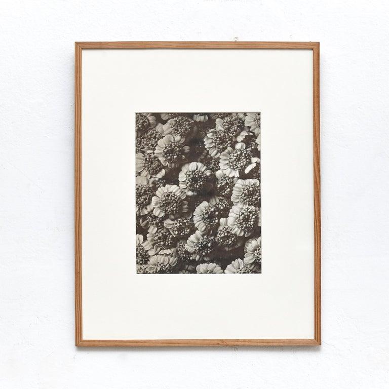 Mid-20th Century Nine Karl Blossfeldt Black White Flower Photogravure Botanic Photography, 1942 For Sale
