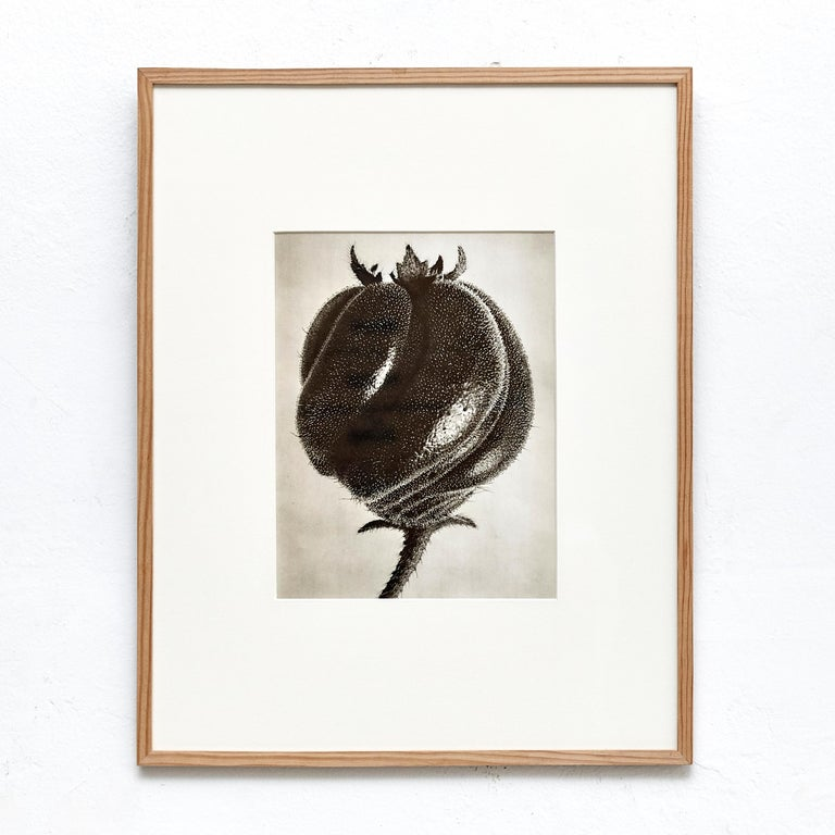 Paper Nine Karl Blossfeldt Black White Flower Photogravure Botanic Photography, 1942 For Sale