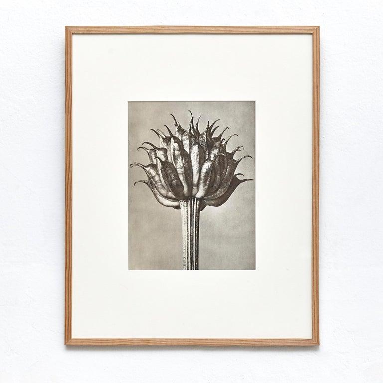 Nine Karl Blossfeldt Black White Flower Photogravure Botanic Photography, 1942 For Sale 1
