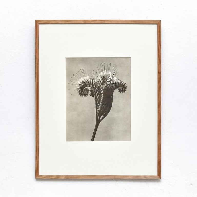 Nine Karl Blossfeldt Black White Flower Photogravure Botanic Photography, 1942 For Sale 2