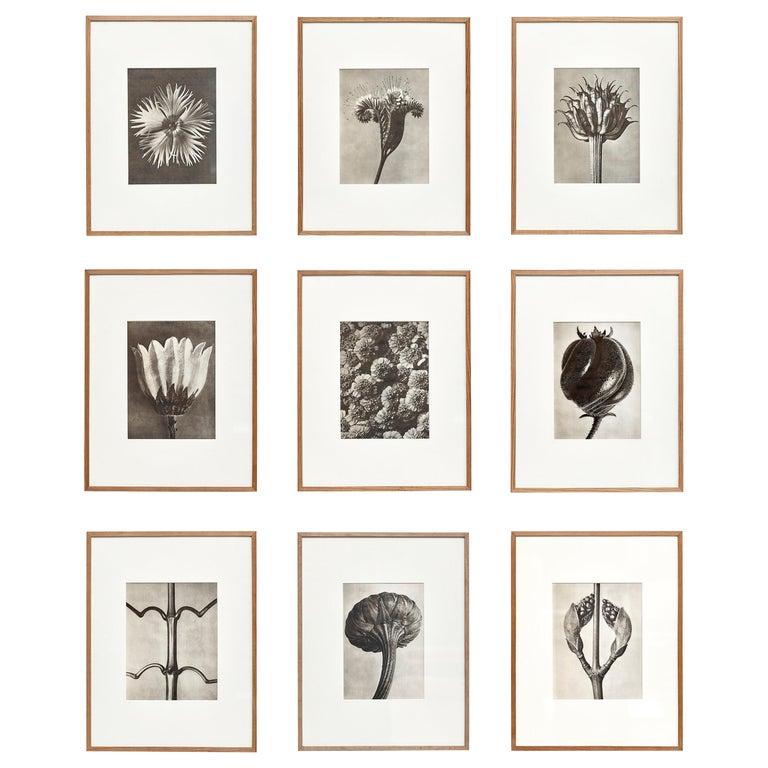 Nine Karl Blossfeldt Black White Flower Photogravure Botanic Photography, 1942 For Sale