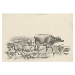 No. 11 Antique Print of Sheep and a Cow by Cooper '1839'