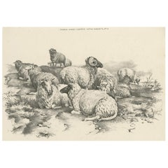 No. 14 Antique Print of Sheep by Cooper, 1839