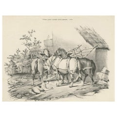 No. 20 Antique Print of Horses by Cooper