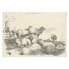 No. 22 Antique Print of Sheep by Cooper, 1839