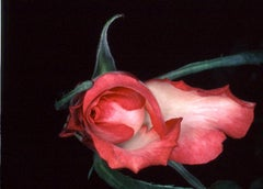 Flower Rondeau #091 – Nobuyoshi Araki, Japanese Photography, Flowers, Nature