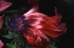 Flower Rondeau #092 – Nobuyoshi Araki, Japanese Photography, Flowers, Nature