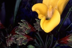 Flower Rondeau #108 – Nobuyoshi Araki, Japanese Photography, Flowers, Nature
