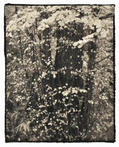 Kamui 4 - 21st Century, Platinum/Palladium Print, Contemporary B&W photography