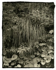 Kei 1 - 21st Century, Platinum/Palladium Print, Contemporary B&W photography