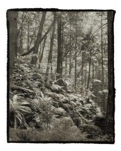 Ki 2 - 21st Century, Platinum/Palladium Print, Contemporary B&W photography