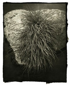 Kodou - 21st Century, Platinum/Palladium Print, Contemporary B&W photography
